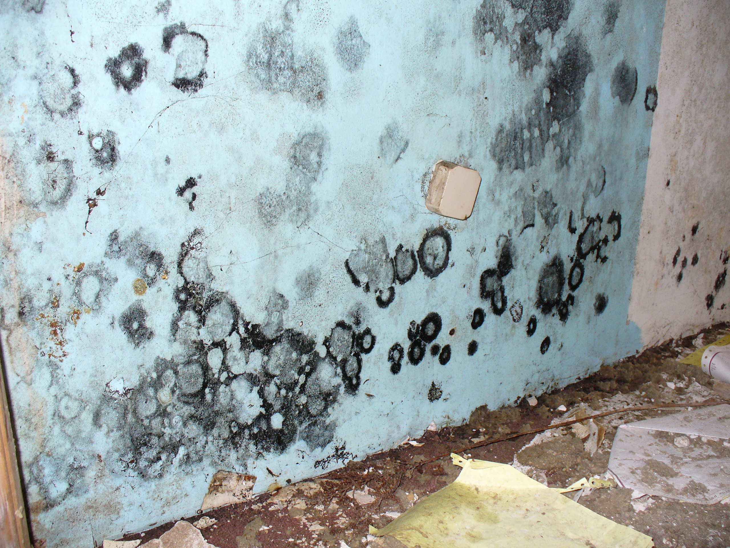 About Mold